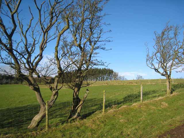 Wayside trees