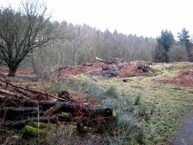 Forestry near Simonburn Castle