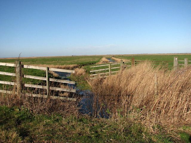 Gapton Marshes