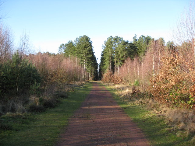 Clumber Park - Track into Woodland