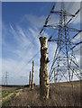 SE9832 : Dead tree trio near Rowley : Week 4