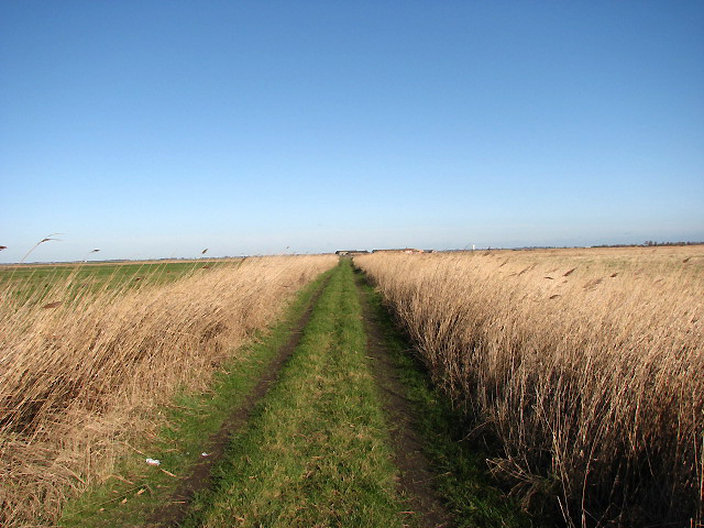 Straight path through Gapton Marshes