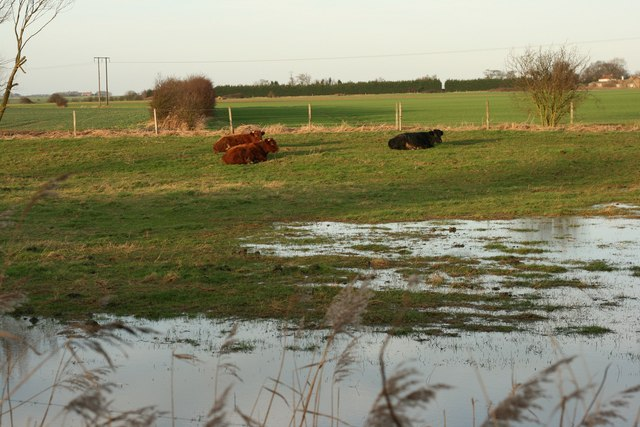 Cows and Fields
