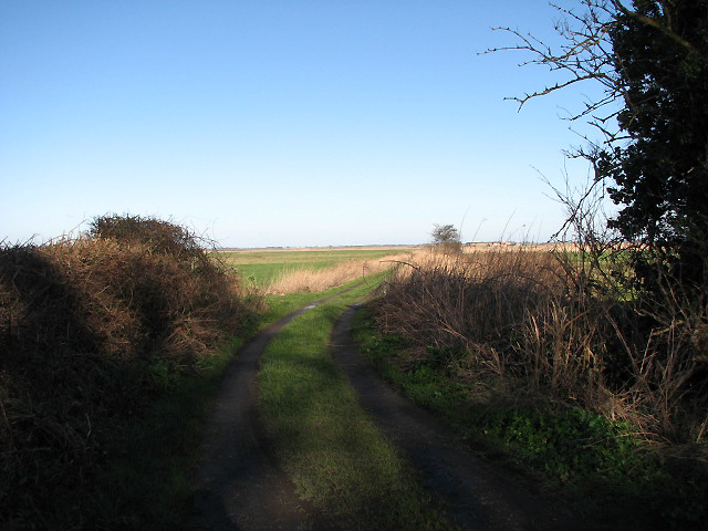 Track through Gapton Marshes