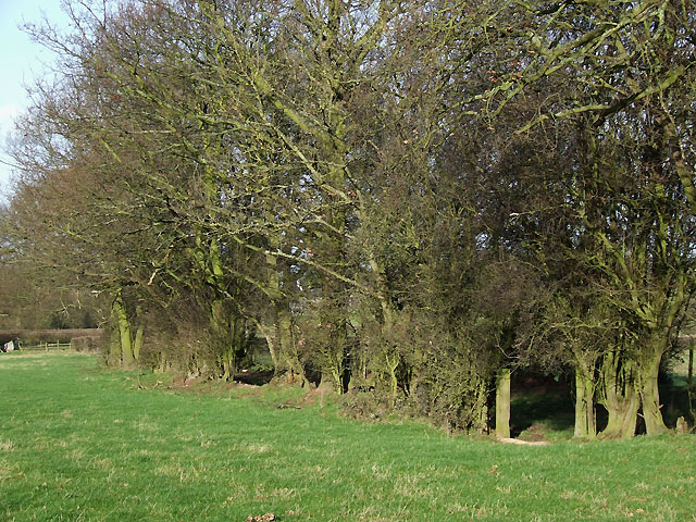 Grazing Land and Trees, near Holdgate, Shropshire
