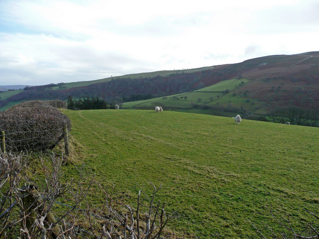 Sheep pasture near Gwarallt Farm
