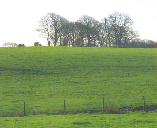 Pasture land south of the Coed-y-Garth farm road