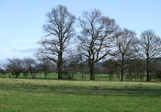 Grazing Land and Oak Trees, Holdgate, Shropshire