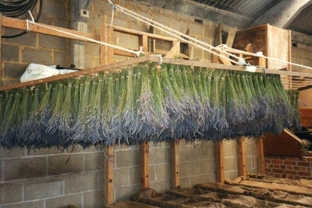 Lavender Shed at Norfolk Lavender, Heacham, Norfolk