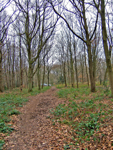 Footpath in Wyre Forest
