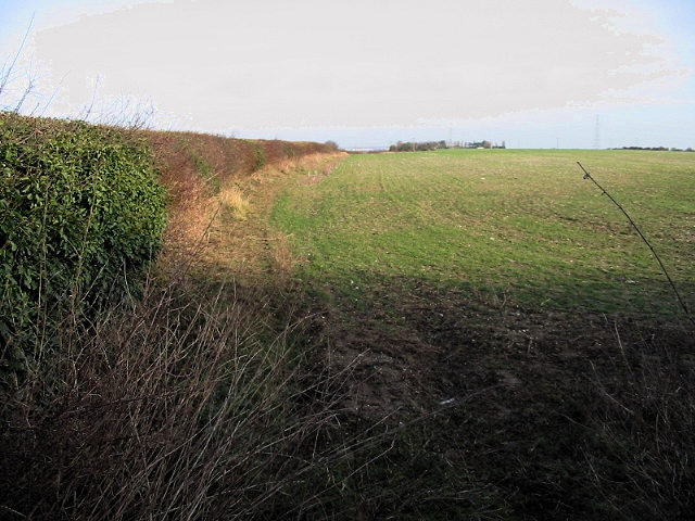 Looking NE along the field boundary on Thornton Lane