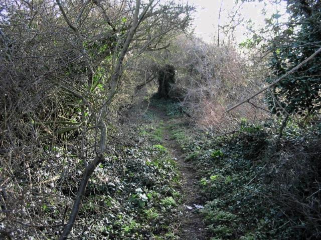 Looking E along Black Lane path