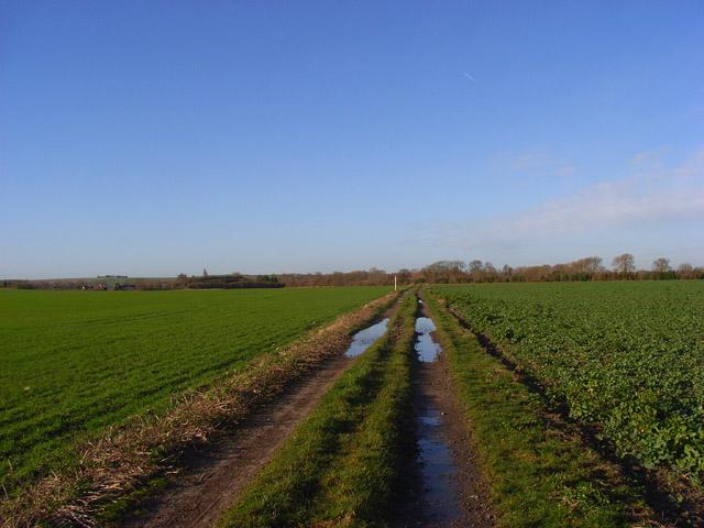 Farm track, Blewbury