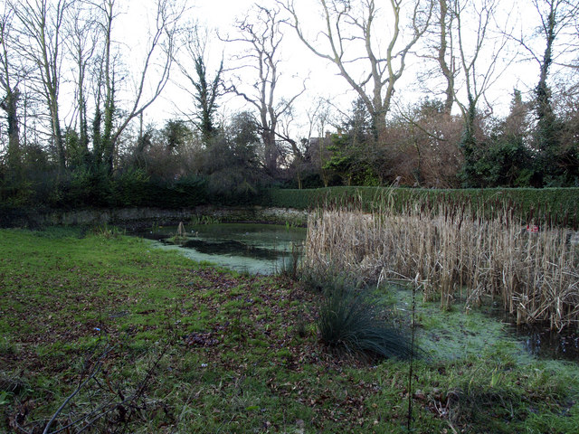 Hedon Pond, Ivy Lane