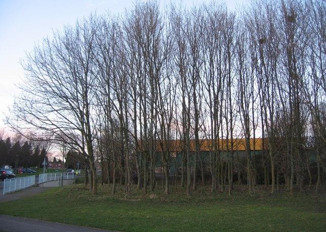 Patch of woodland by Winklebury Way