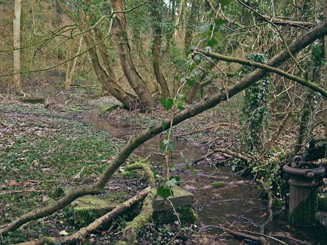 Stream in Elloughton Dale