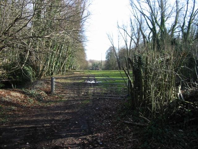 View through Garden Wood to Dane Court