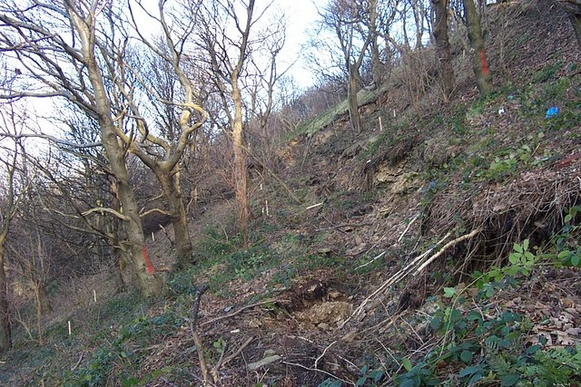 Landslide Reins Wood