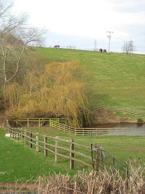 Hillside grazing east of Black House Farm