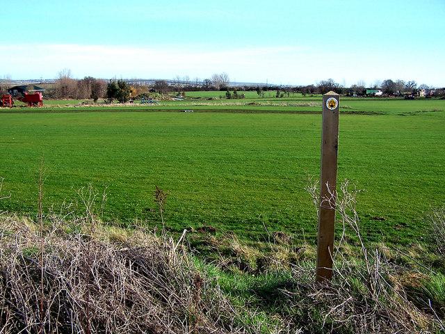 Unusual fields