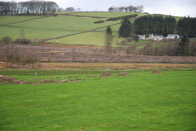 Looking across towards Banks Farm