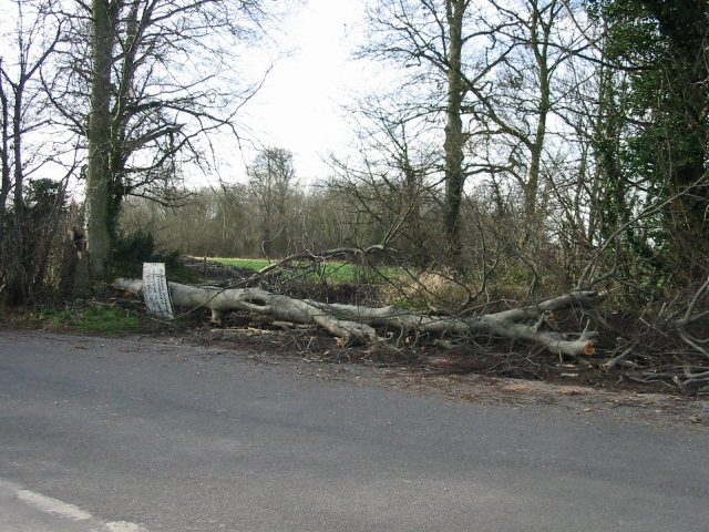 A casualty of the recent high winds