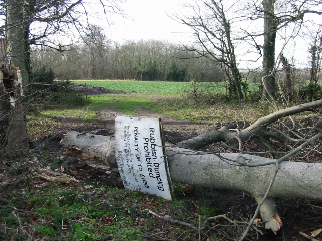 Fallen tree in the Summerhouse Plantation