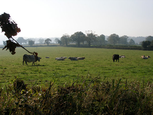 Offwell:  Grazing Land near Colyton Cross 2007