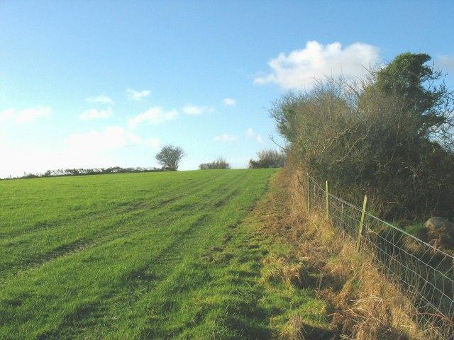 Cultivated grass above Afon Erch