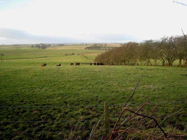 Fields behind Merry Shiels