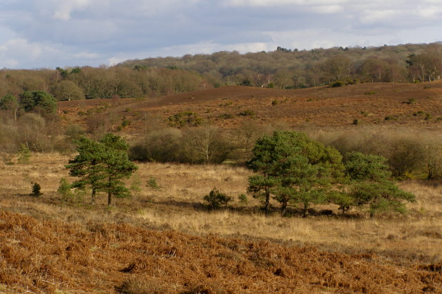 Digden Bottom from Ibsley Common, New Forest