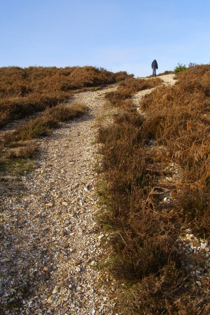 Steep footpath up to Ibsley Common plateau, New Forest