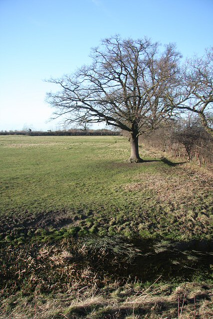 Field at Stow cum Quy