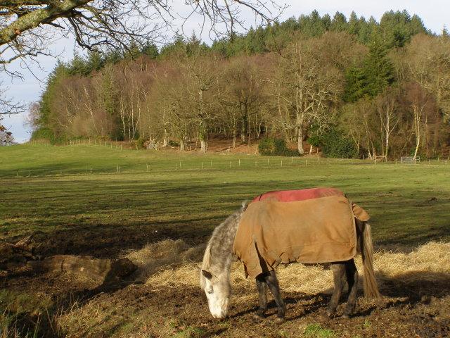 Horses near Moyles Court