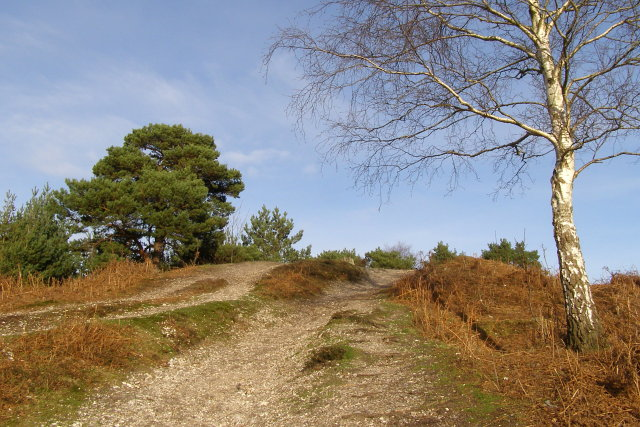 Mutilated round barrow on the edge of Rockford Common, New Forest