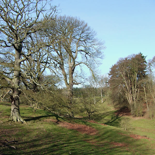 Grass and Woodland in Millichope Park, Shropshire