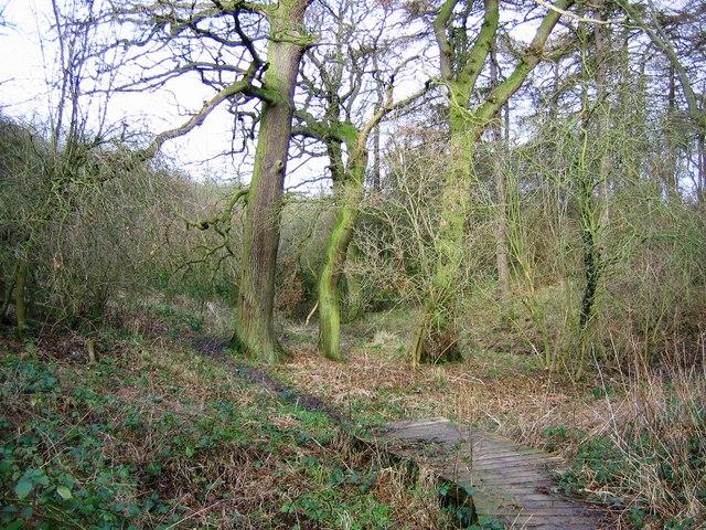 Footpath along Bassleton Beck