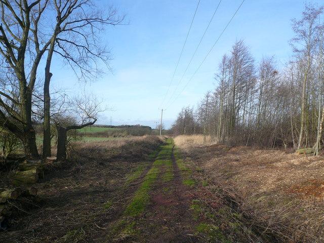 Doe  Lea Nature Reserve Path