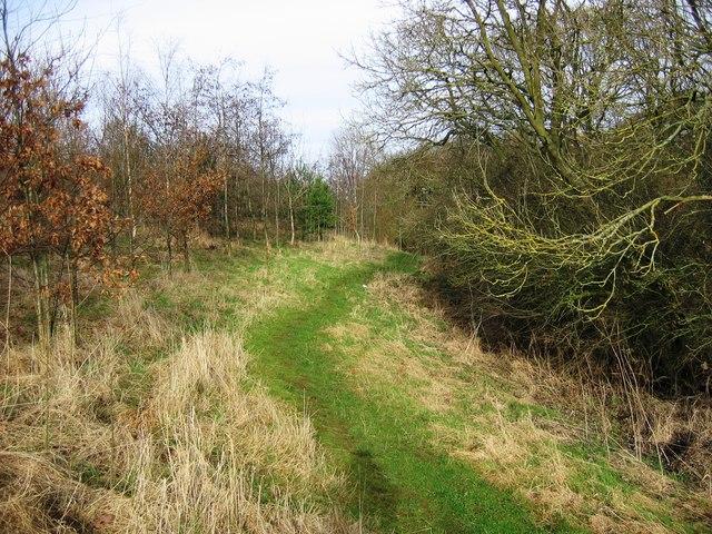 Path alongside Bassleton Beck