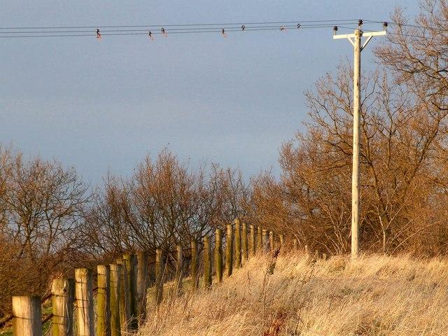 Power pole, Old Bolingbroke