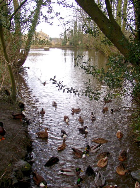 Saw Mill pond, off Bolton Road, Addingham