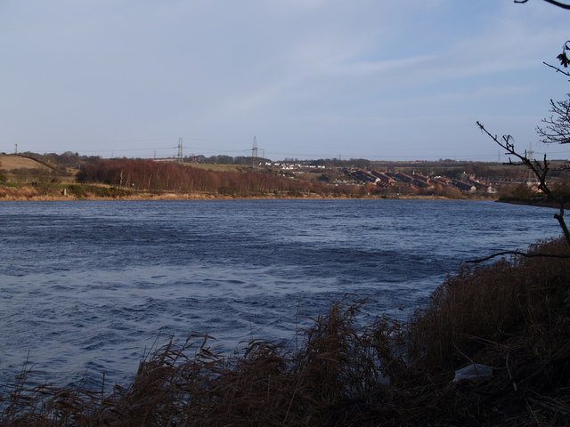 The Tyne at Ryton Willows