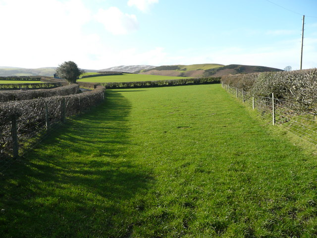 Field between two lanes