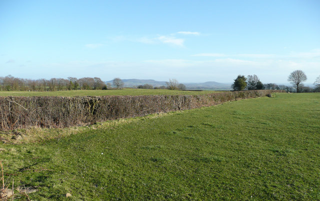 Pasture land in West Herefordshire