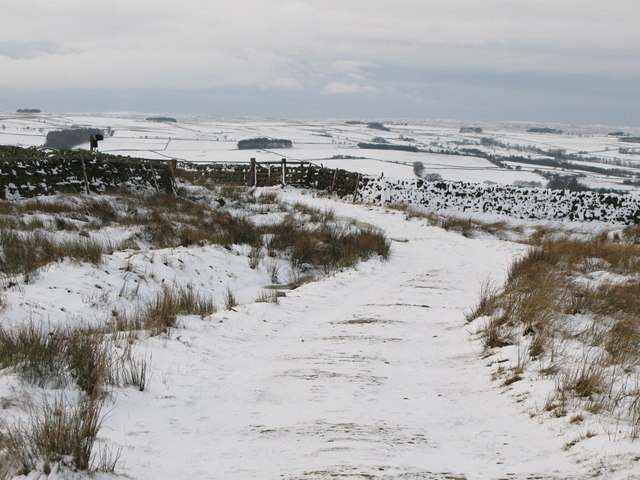 The track down to Allendale (2)