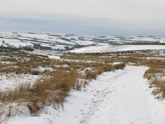 The track down to Allendale (3)