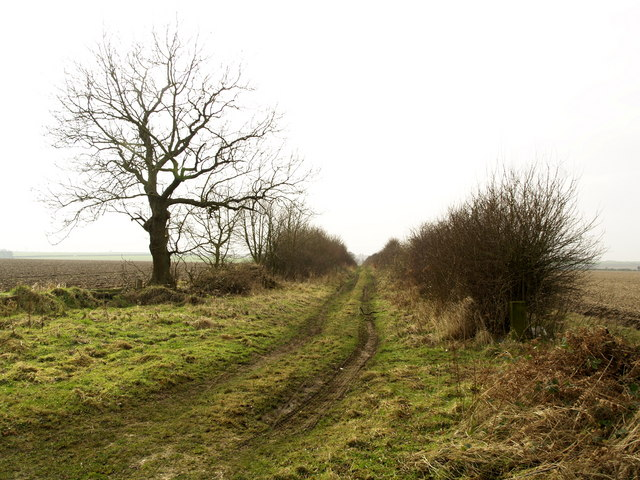 Owmby Wold Lane from Hendale Wood