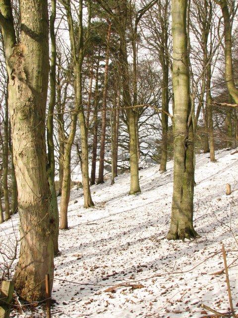 Trees, Castle Venlaw Hotel