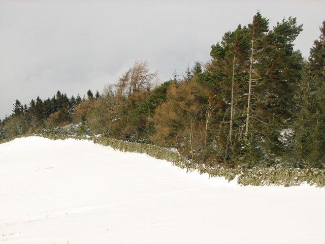 Forest edge, Mailingsland Hill