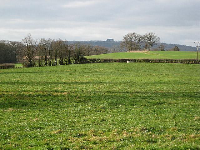 Grazing land near The Grove